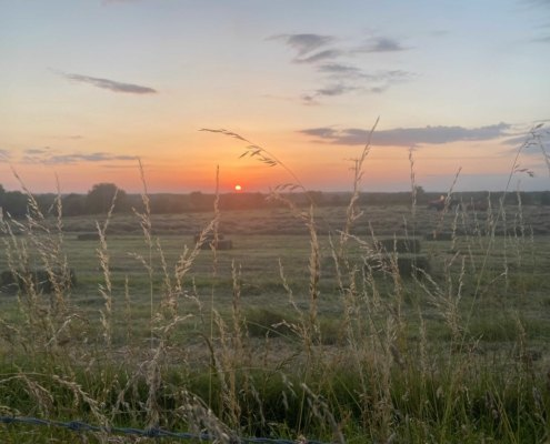 Haymaking at Hall Farm Summer 2021